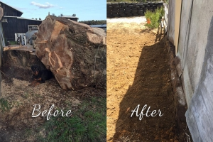 Tree removal and yard cleanup