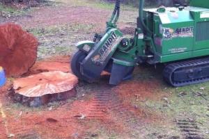 Bandit Stump Removal