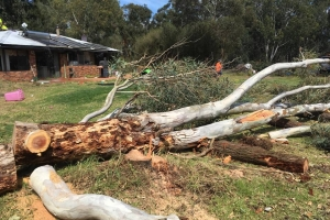 Tree Removal in Dardanup West