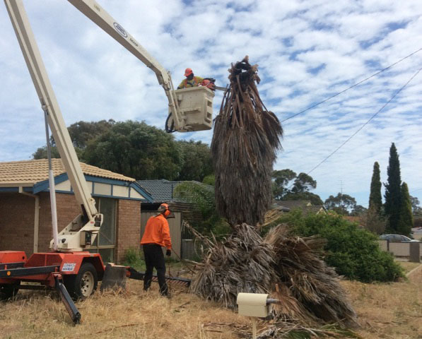 Tree Removal by Armac Stump Grinding