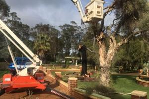 Tree Cutting