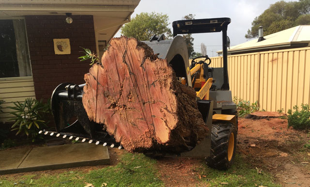 Big Tree Removal By Armac Stump Grinding