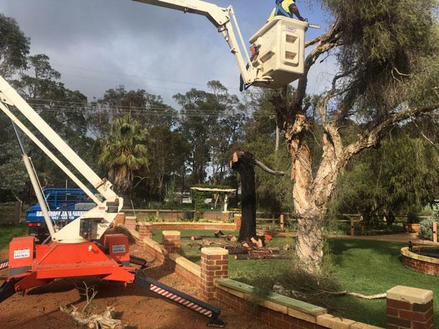 Tree Cutting By Armac