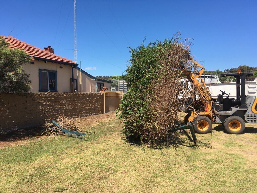 Tree removed by Armac