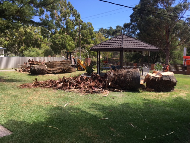 tree removed