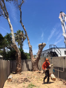 Removing a tree by ARMAC