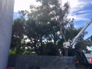 Tree removal in the courtyard