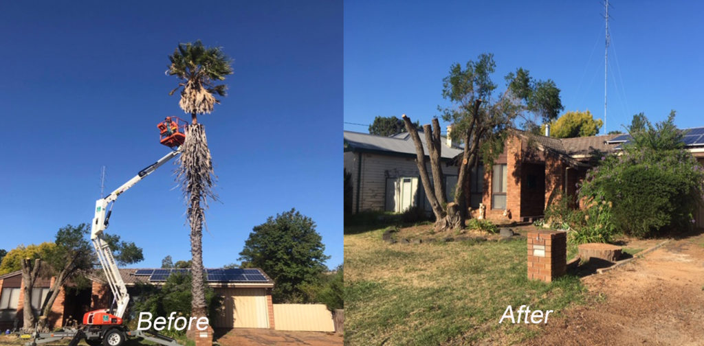 before and after by Armac Stump Grinding
