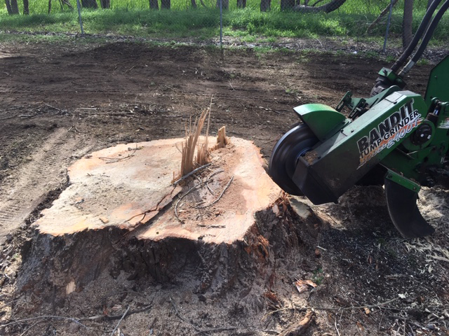 Stump removal in Bunbury