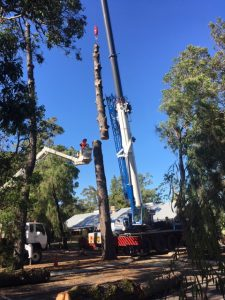 ARMAC tree removal services