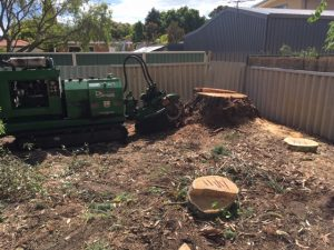 Cypress Pine and Eucalypt stump removal